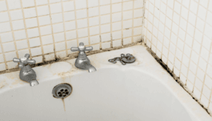 How to Remove Black Mold from Shower