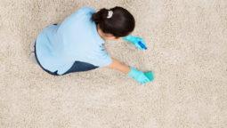 I shampooed my carpet and now it smells like urine