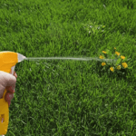 Best Weed Killer That Won't Kill Grass