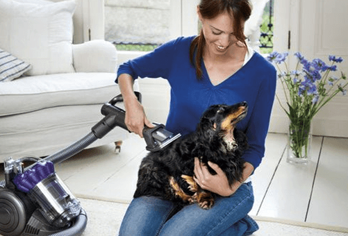 Can you vacuum your dog to get rid of fleas