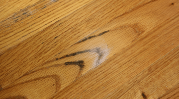 Signs of Mold under hardwood floors