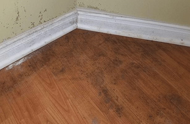 Get Rid Of Mold Under Laminate Flooring, How To Get Mold Smell Out Of Laminate Flooring