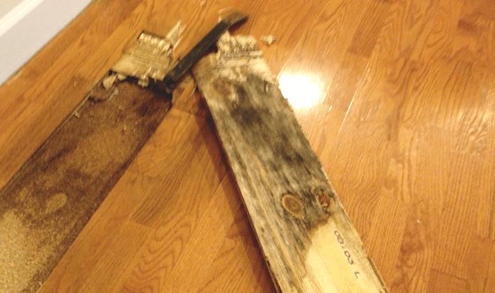 Is Mold Under Flooring Dangerous