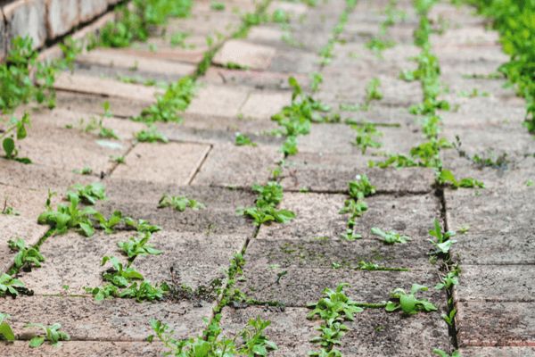 How to Permanently Get Rid Of Weeds in Driveway