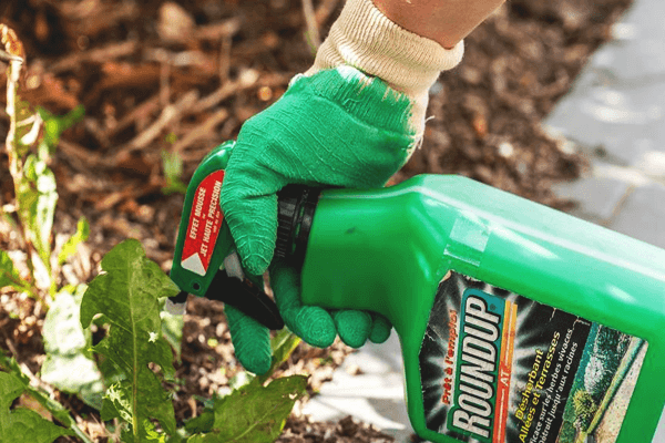 How Long Does Roundup Take to Work